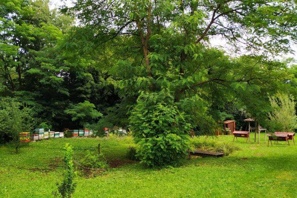 Vadvirág méhes- és gyógyítókert